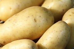 Organische aardappels Stock Fotografie