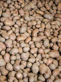 Organische aardappels Royalty-vrije Stock Foto's