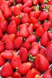 Organische aardbeien in een stapel Royalty-vrije Stock Foto