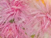 Organische Abstraktion des hellen rosa Eises Lizenzfreie Stockfotos