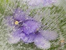 Organische Abstraktion mit den lila Blumen zerbrechlich Lizenzfreies Stockfoto
