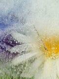Organische Abstraktion mit Kamillenblume Lizenzfreie Stockbilder