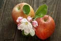 Organische appelen Royalty-vrije Stock Foto