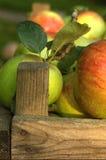 Organische appelen in krat Royalty-vrije Stock Foto's