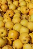 Organische appelen in krat Royalty-vrije Stock Afbeeldingen