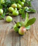 Organische Appelen met bladeren Stock Foto