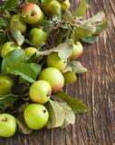 Organische Appelen met bladeren Royalty-vrije Stock Afbeelding