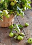 Organische Appelen met bladeren in de Mand. Royalty-vrije Stock Afbeelding