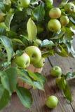 Organische Appelen met bladeren in de Mand. Stock Foto's