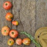 Organische Bearbeitung der Tomaten Lizenzfreies Stockbild
