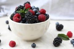 Organische Beeren des Sommers Gesunde Nahrung Gemischte frische Beeren Brombeere, Blaubeere Himbeere und tadellose Blätter Stockbilder