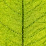 Organische bladachtergrond Stock Afbeelding