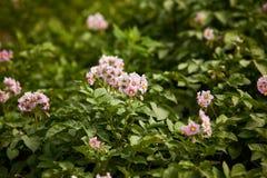 Organische bloemen Stock Foto