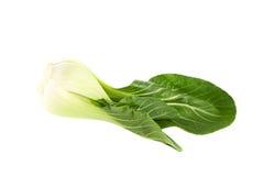 Organische bok choy op witte achtergrond Stock Afbeeldingen