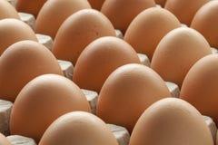 Organische braune Eier in der Kartonkiste Lizenzfreie Stockfotos
