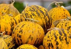 Organische Casaba Meloen Royalty-vrije Stock Foto's