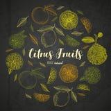 Organische citrusvruchtenbanners De uitstekende stijl van de gravureschets Het grote gezonde malplaatje van het voedselontwerp me vector illustratie