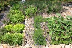 Organische cultuur van kruiden en groenten Stock Afbeeldingen