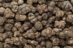 Organische Droge van Kaasfruit of Noni (Morinda-citrifolia) zaden Stock Afbeelding
