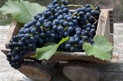 Organische druiven in houten doos stock afbeelding