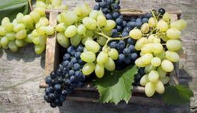 Organische druiven in houten doos royalty-vrije stock afbeelding