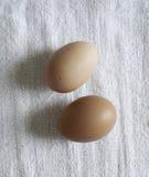 Organische Eieren Stock Foto