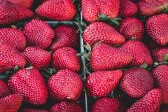 Organische Erdbeeren für Verkauf am Markt Lizenzfreies Stockfoto