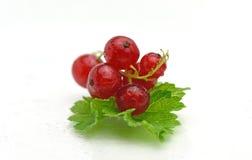 Organische frische köstliche Beere der roten Johannisbeere Stockfotos