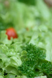 Organische fruitsalade royalty-vrije stock afbeeldingen