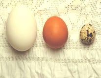Organische gans, kippen en kwartelseieren Royalty-vrije Stock Foto