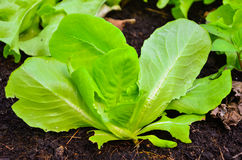 Organische Gartenarbeit Stockbild