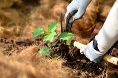 Organische Gartenarbeit mit Werkzeugen lizenzfreie stockfotografie