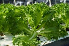 Organische Gemüsebauernhöfe Stockfotos