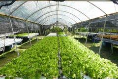 Organische Gemüsebauernhöfe Lizenzfreie Stockbilder