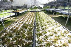 Organische Gemüsebauernhöfe Stockfotografie