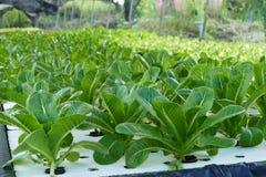 Organische Gemüsebauernhöfe Stockbilder
