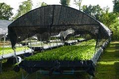 Organische Gemüsebauernhöfe Stockbild