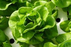 Organische Gemüsebauernhöfe, Draufsicht Lizenzfreie Stockbilder