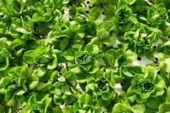 Organische Gemüsebauernhöfe, Draufsicht Lizenzfreies Stockfoto