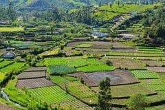 Organische Gemüsegärten, Munnar, Indien stockbilder
