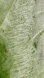 Organische grüne Abstraktion Lizenzfreie Stockbilder