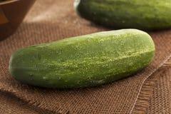 Organische grüne Essiggurken-Gurken Stockbilder
