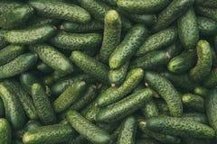 Organische grüne Gurken auf lokalem landwirtschaftlichem Gemüsemarkt Lizenzfreie Stockbilder