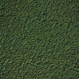 Organische grüne Schlammbeschaffenheit des Lit Stockbilder
