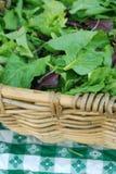 Organische Grüns für Verkauf am Markt eines Landwirts Stockbilder