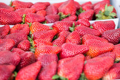 Organische groente bij landbouwersmarkt Stock Foto