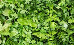 Organische groente bij landbouwersmarkt Royalty-vrije Stock Fotografie