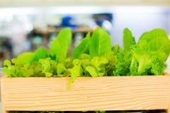 Organische groente in houten bestelwagen van het kweken van landbouwbedrijf de groenten zijn vers en schoon stock foto