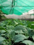 Organische groenten stock afbeeldingen