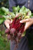 Organische groenten royalty-vrije stock afbeeldingen